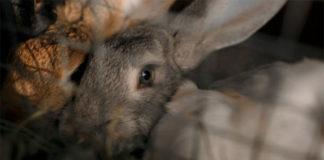 Основные породы кроликов разводимые в России