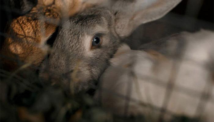 Основные породы кроликов, разводимые в России