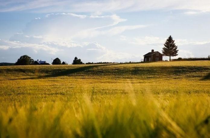 Порядок подготовки документов о признании земель «невостребованными» предложили уточнить
