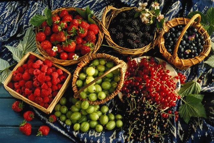 Производство плодов и ягод вырастет на 41% к 2024 году
