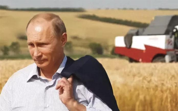 Путин потребовал проконтролировать доведение субсидий до аграриев