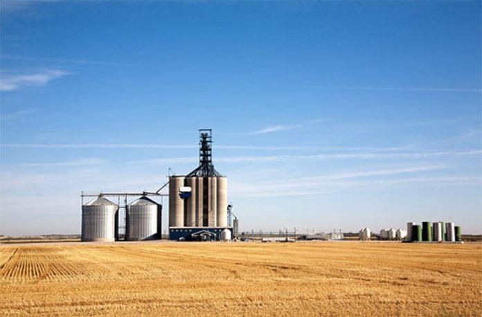 РЗС в 2019 году Россия может побить исторический рекорд по сбору зерна