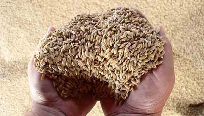 Россия вышла на первое место в мире по экспорту пшеницы, сообщил Медведев