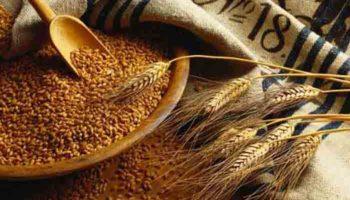Рост экспортных цен на зерно из России привел к повышению внутренних цен