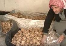 Сельское хозяйство Сирии процветает благодаря большому урожаю трюфелей