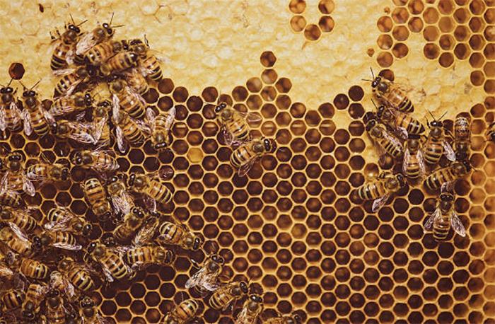 Создаем новые пчелиные семьи