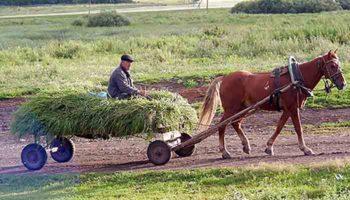 Список получающих надбавку к пенсии работников сельского хозяйства пересмотрят
