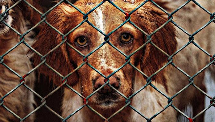 Уголовное дело после убийства собак в питомнике возбуждено в Татарстане
