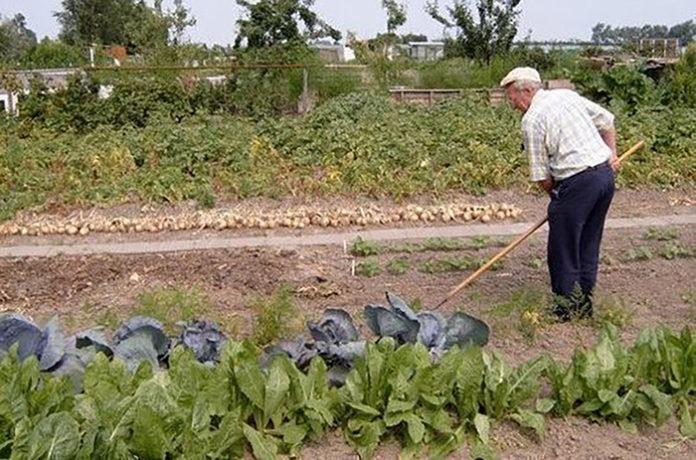 В Госдуму внесли законопроект о налоговых льготах для огородников и садоводов