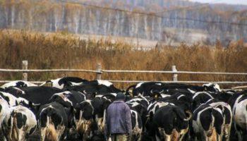 В Карелии значительно выросли зарплаты в сельском хозяйстве