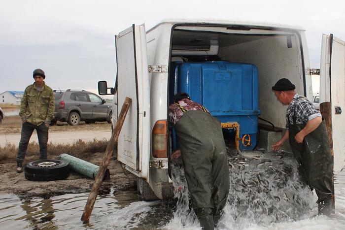 Photo of В Крыму начали выращивать морскую промысловую рыбу