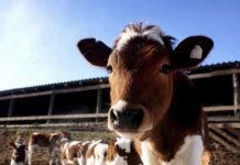 В Тамбовской области открылась новая молочно-товарная ферма