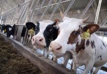 Вьетнамский TH Milk Food планирует инвестировать в АПК Татарстана