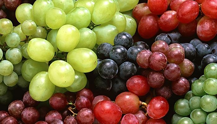 Виды и сорта винограда