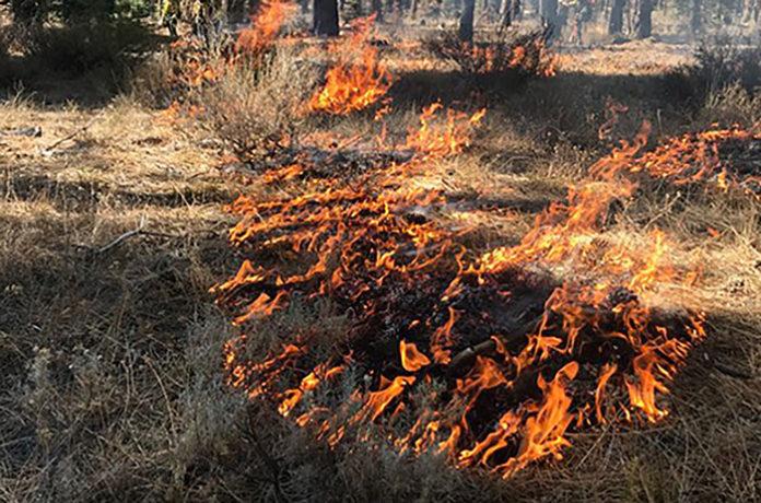 За поджог травы предложено отбирать землю