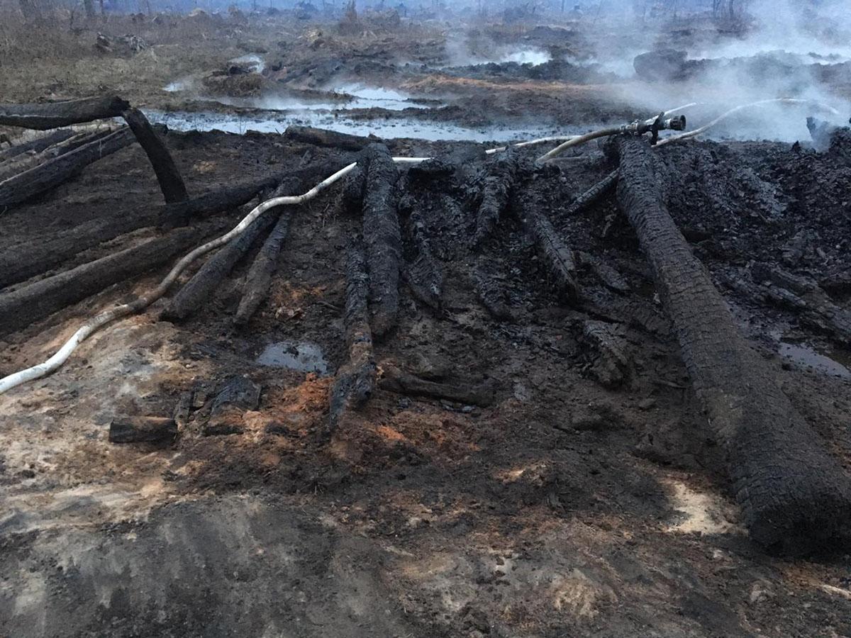 Заявление о причинах пожарах в парке «Лосиный остров»
