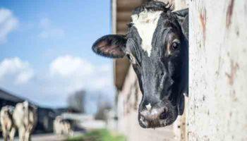 Законопроект об агротуризме внесен в Госдуму