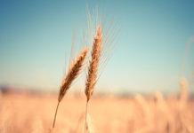 Осипов назвал причины проблем в сельском хозяйстве Забайкалья