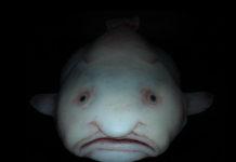 Профилактика и лечение болезней рыб