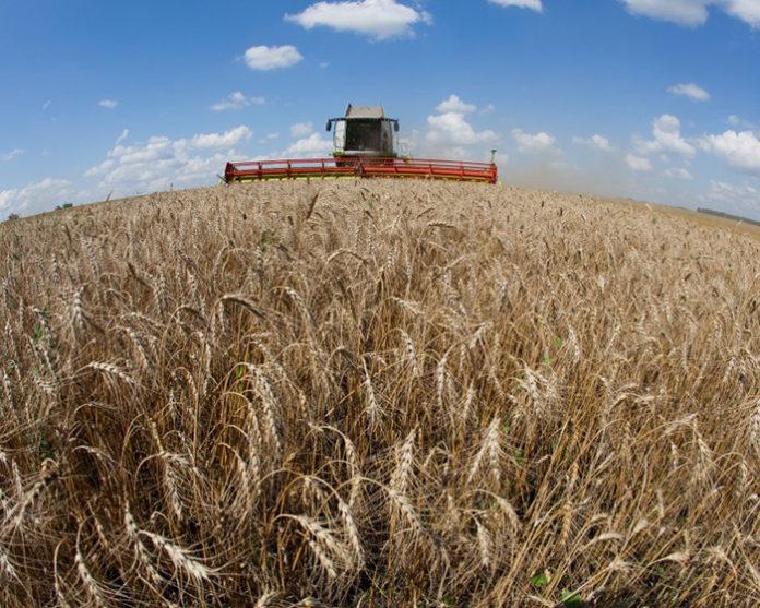 Стратегия развития зерновой отрасли потребует 4,4 трлн рублей до 2035 года