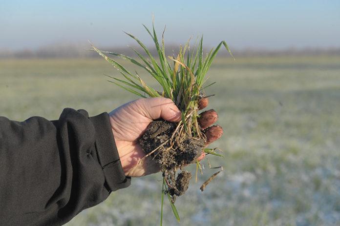 В Министерстве сельского хозяйства Башкирии рассказали про ущерб от выпавшего снега