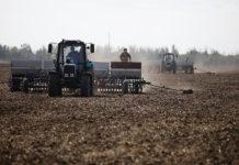 В Татарстане погода погубила 120 тысяч гектар озимых на 1,5 миллиарда рублей