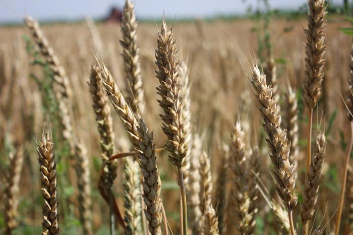 В Татарстане с начала года создано 20 сельхозкооперативов