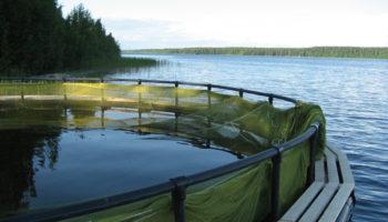 Влияние окружающей среды на выращивание рыб в садках