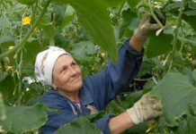 Аграрии Приморья получат льготные банковские гарантии