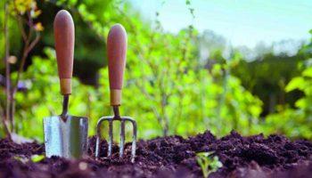 Что делать в саду и огороде в мае