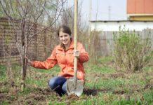 Что нужно успеть сделать в плодовом саду в мае