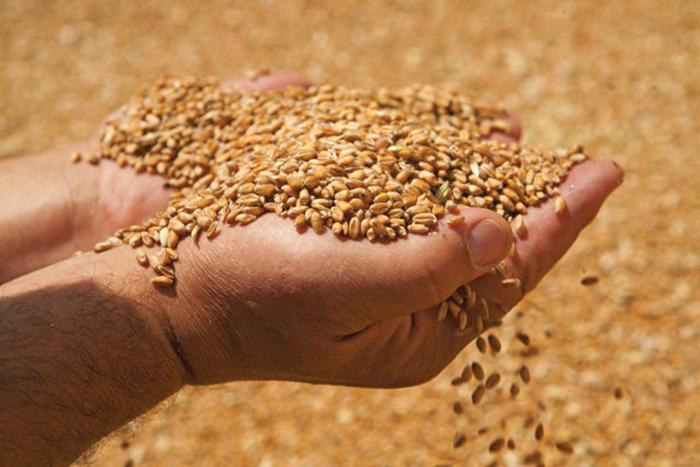 Действие декларации на зерно приостановлено