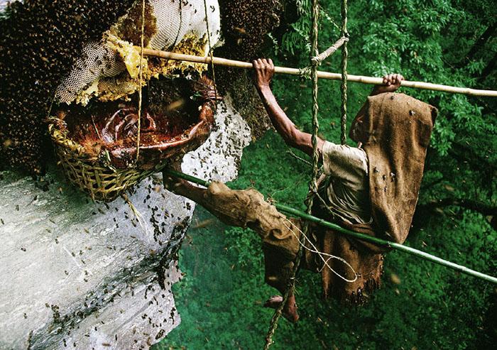 Добыча меда в Африке