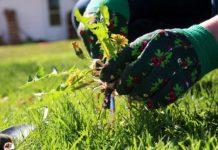 Долой сорняки простое средство которое избавит от вредной растительности на даче