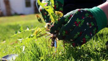Долой сорняки: простое средство, которое избавит от вредной растительности на даче