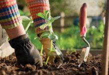 Главные заботы садоводов и дачников в мае