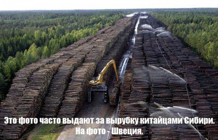 История фейка Китай вырубил Сибирские леса и опустошил Байкал