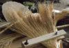 Из какого растения делают веники