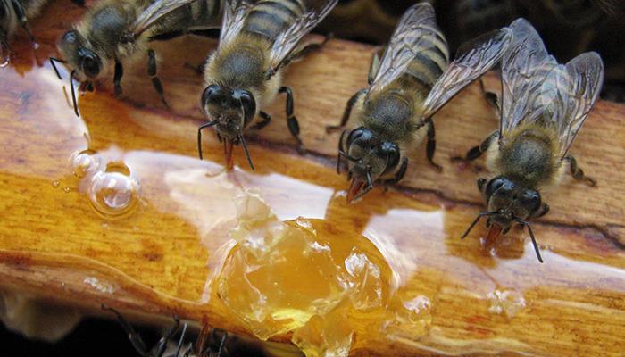 Кормление пчел в весенний период