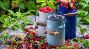 Как угодить ягодам — минимум ухода, максимум урожая
