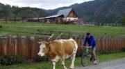 Минсельхоз предложил запустить программу льготной ипотеки для жителей села