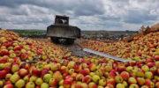 Москва побеждает в пятилетней яблочной войне
