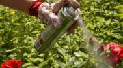 О лекарствах против грибков