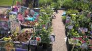 Россельхознадзор оштрафовал продавцов саженцев на Тюменской ярмарке