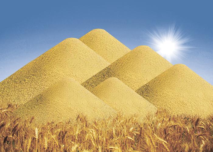 Россию вновь ждет богатый урожай зерна