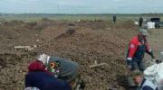 Щедрая душа! 50 тонн картошки кто-то выкинул в поле у села Кардаилово
