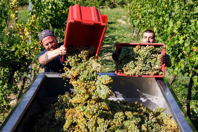 Семья экс-министра сельского хозяйства защитила винодельню