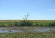 Сколько заплатили белгородские предприятия за неправильные удобрения на полях