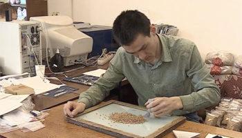 Учёные омского аграрного университета вывели фиолетовую и многолетнюю пшеницу 🎥