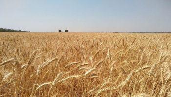 Украина получит от США $35 млн на поддержку аграрного сектора